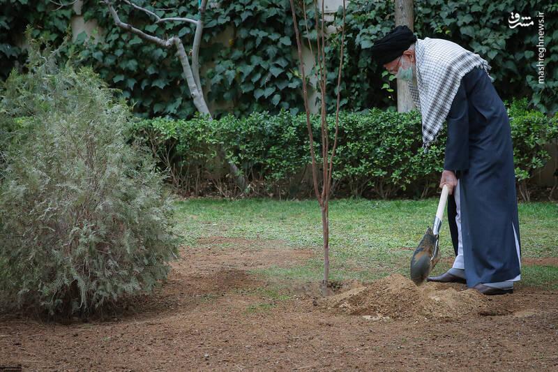 عکس/ کاشت دو نهال میوه توسط رهبر انقلاب