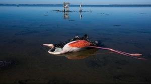 آیا علت مرگ پرندگان میانکاله واقعا بوتولیسم است؟