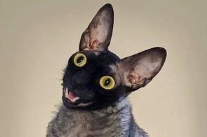داستان «زشت ترین گربه تاریخ» که توسط شیطان تسخیر شده است