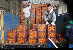تامین میوه شب عید؛ قیمت ها کاهش مییابد