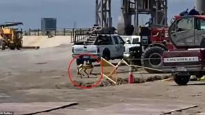 سگ رباتیک در تاسیسات اسپیسایکس پس از انفجار SN۱۰