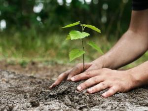 تقویم تاریخ/ روز درختکاری و آغاز هفته منابع طبیعی تجدید شونده