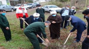 آغاز کاشت یک میلیون اصله نهال در مازندران