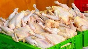 بازار مرغ در قزوین تا چند روز آینده به تعادل میرسد