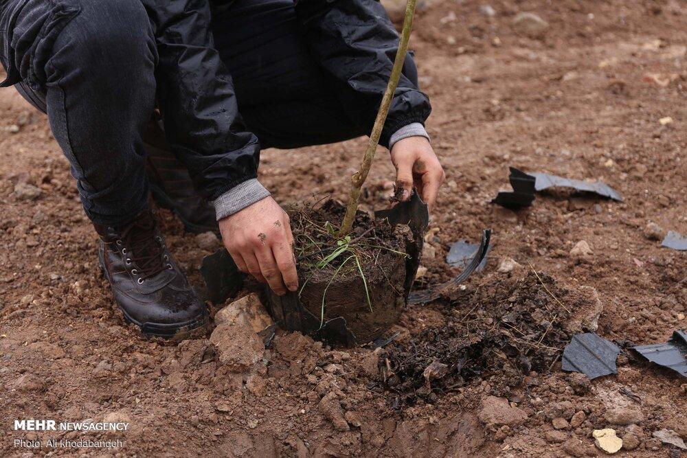 درختکاری و اجرای پویش «مظهر حیات» در قزوین