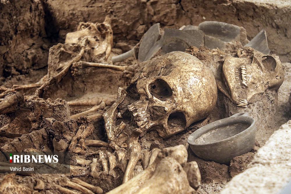 عکس/ اسکلت انسان دوران باستان در موزه شهر قزوین