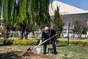 کاشت یک اصله نهال گیلاس توسط قالیباف در محوطه مجلس