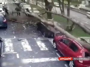 لحظه سقوط درخت غول پیکر در استانبول