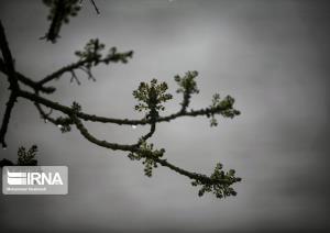 قنبرباغی اسفراین بیشترین میزان بارش خراسان شمالی را داشت