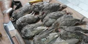 دستگیری متخلف شکارچی کبک وحشی در سرچهان