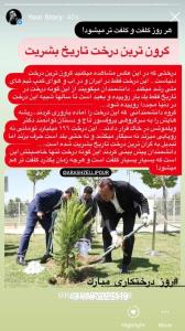 گرانترین درخت تاریخ بشریت!