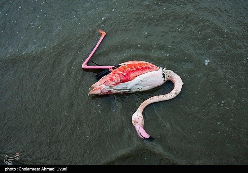 عکس/ مرگ و میر پرندگان مهاجر در ایران