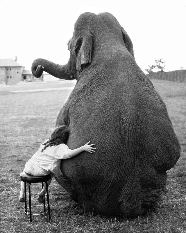 رابطه دوستانه یک دختربچه و فیل سیرک