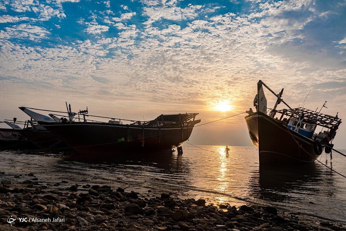 عکس/ بوشهر، نهنگ پیر خلیج فارس