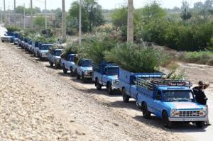 آغاز عملیات اجرایی کاشت ۴۵۰۰ نهال مثمر نخل در خرمشهر
