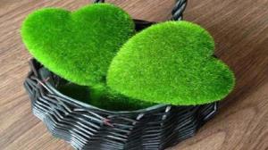 آموزش کاشت سبزه به شکل قلب برای شب عیدی عروس