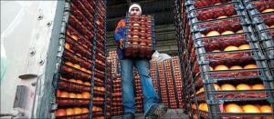 رشد تا 5 برابری قیمت میوه در شبکه توزیع