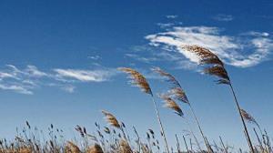 پیشبینی وزش باد در استان کرمان