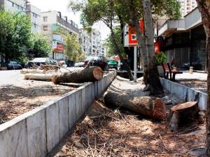 جریمه ۳۵۰ میلیاردی قطع درختان؛ پولها کجا رفت؟
