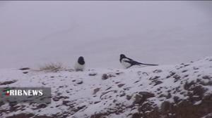 باد شدید در راه استان زنجان