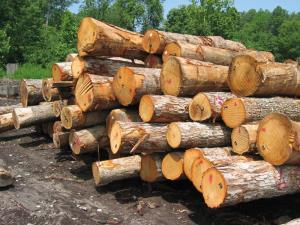 واژگونی جرثقیل حین بلند کردن تنه درخت!