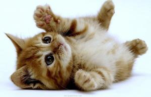 نجات بچه گربه ها از داخل دیوار