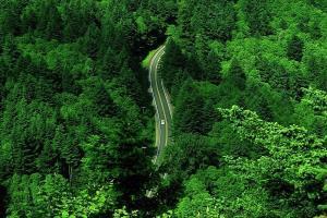 رصد هوایی جنگلهای گیلان به زودی آغاز میشود