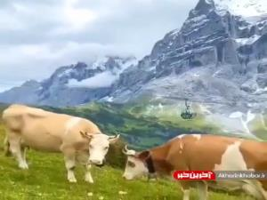 سوئیس کشوره یا بوم نقاشی؟