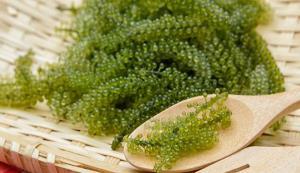 خاویار سبز، گیاهی که فقط بر فرآِیند رشد تمرکز میکند!