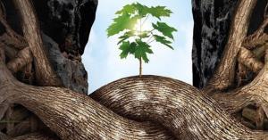 درختان؛ موجوداتی بی مغز اما باهوش