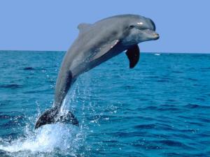 آزاد کردن دلفین توسط دو صیاد