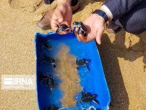 خرید و فروش غیر مجاز گونههای جانوری وحشی در قزوین ممنوع است