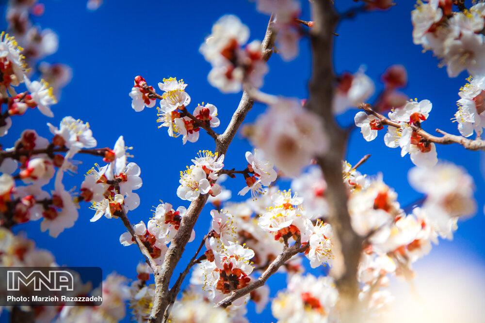 بهار در راه است