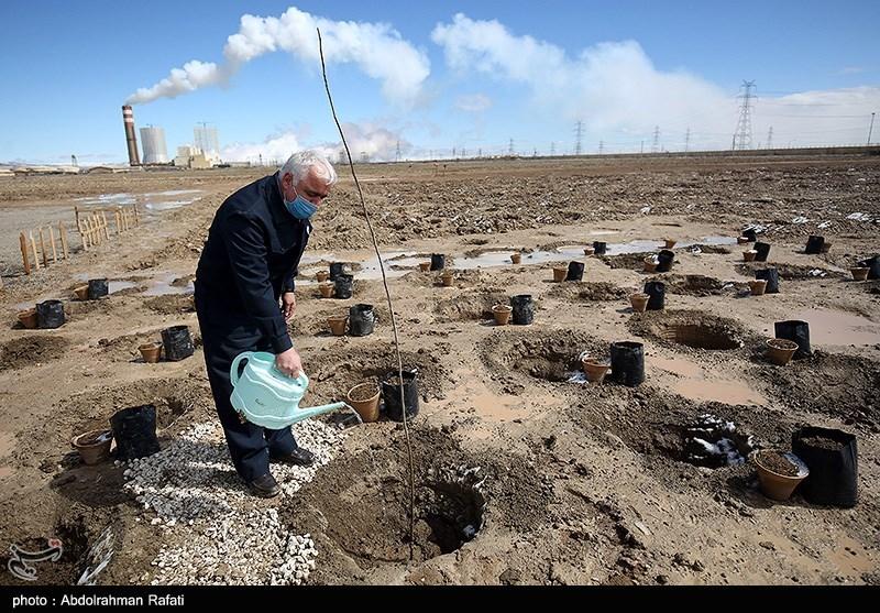 کاشت 100 هزار درخت در نیروگاه مفتح همدان