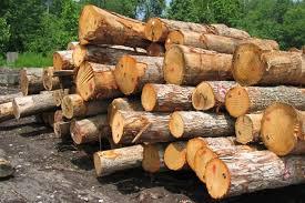 کشف چوب قاچاق در محور مواصلاتی شیراز به گچساران