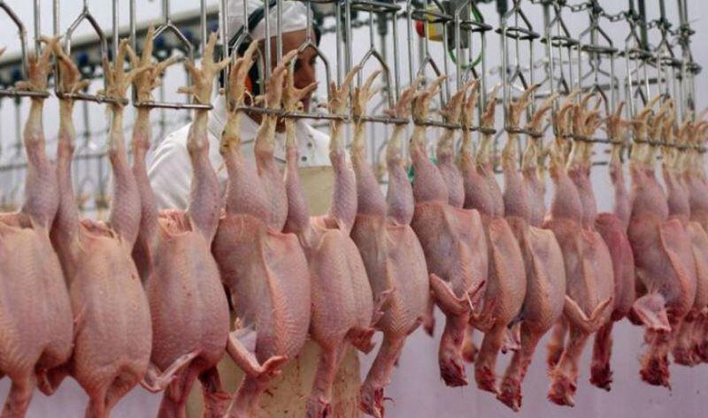 ۷۰ دلال گوشت مرغ در فارس شناسایی شدند