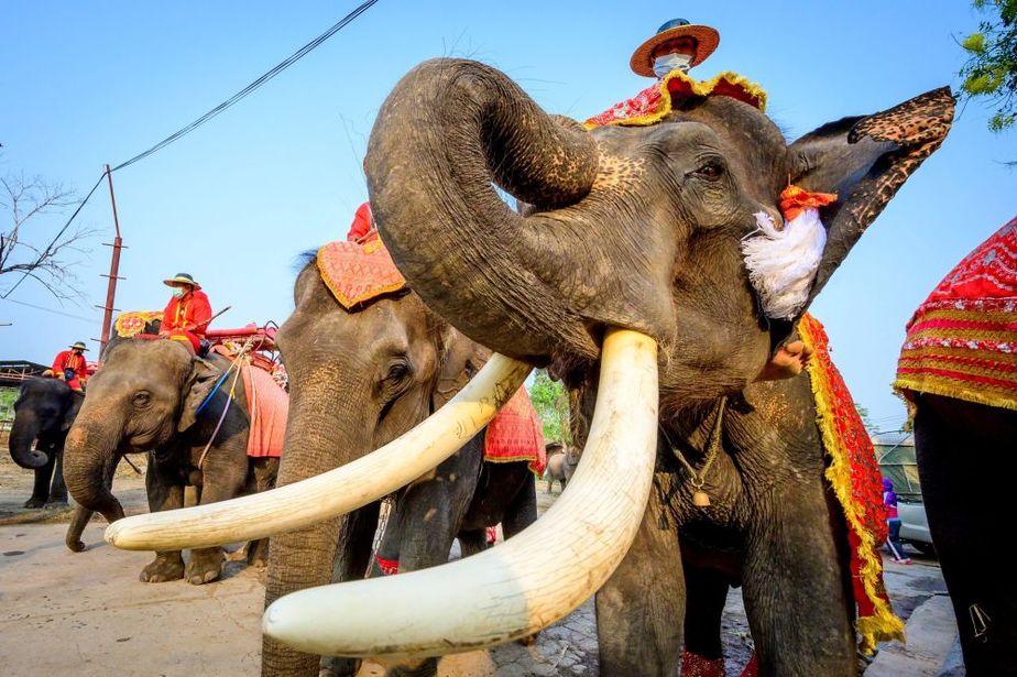 روز ملی فیل در تایلند