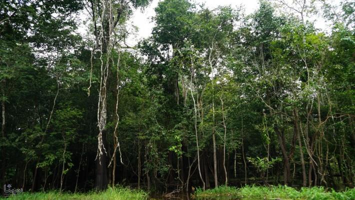 تا صد سال دیگر مناطق استوایی زمین قابل سکونت نیست