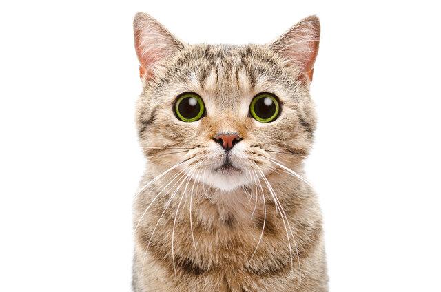 وقتی گربهها به درمان بیماری مزمن کلیه کمک میکنند!