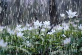 کاهش ۱۹ درصدی بارشها در چهارمحالوبختیاری
