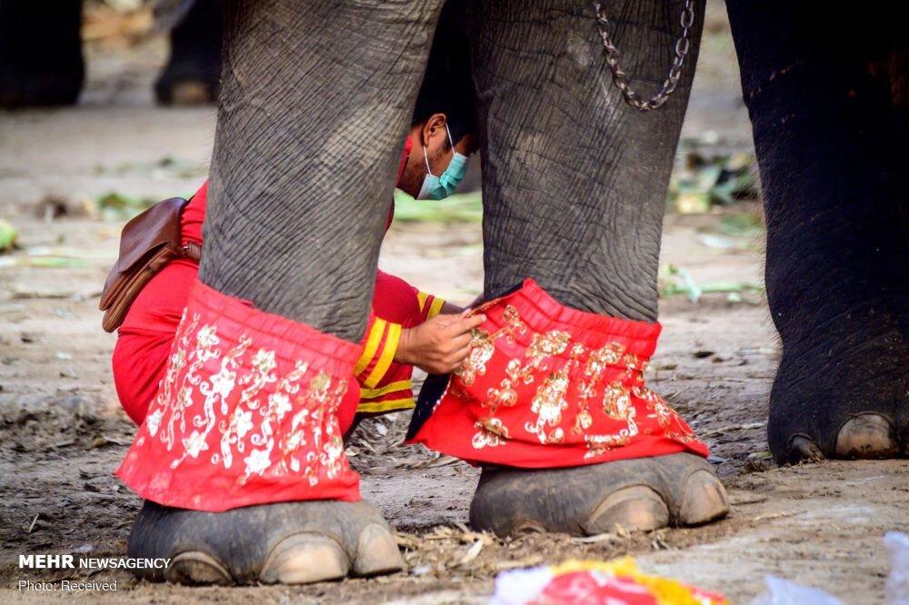 روز ملی فیل ها در تایلند