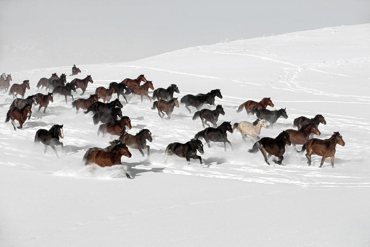 اسبهای وحشی در برف