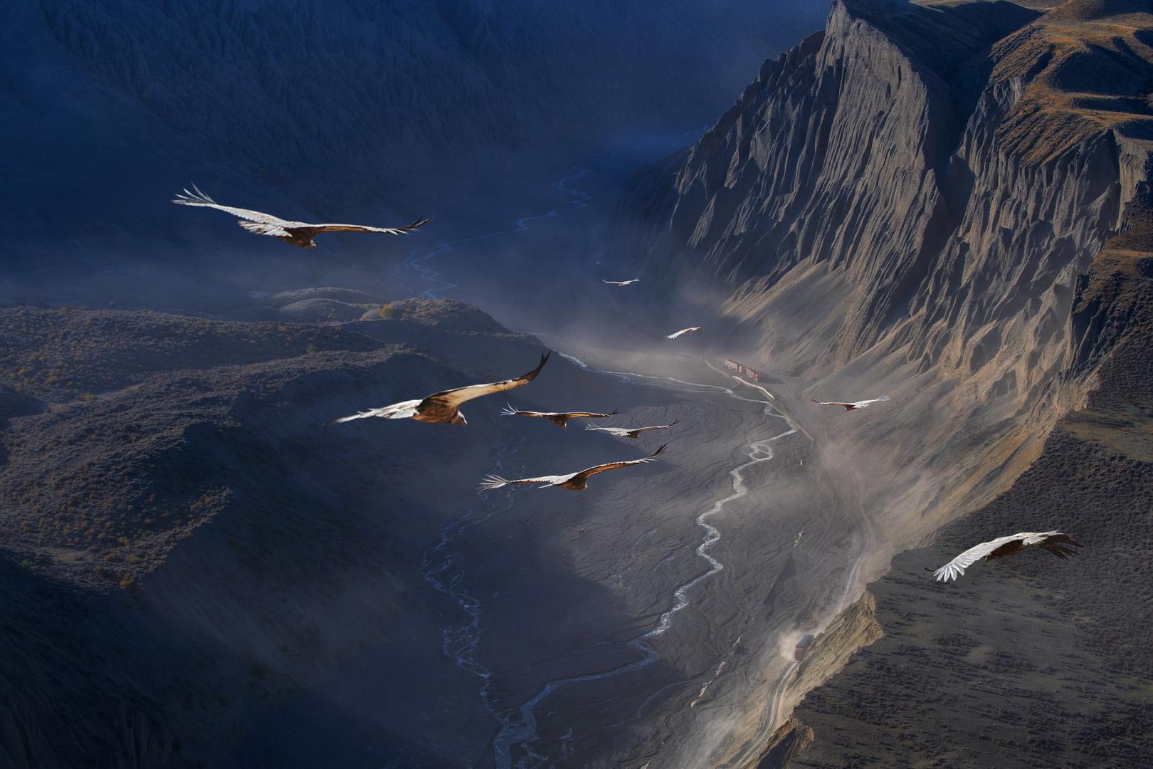 پرواز دیدنی عقابها در آسمان