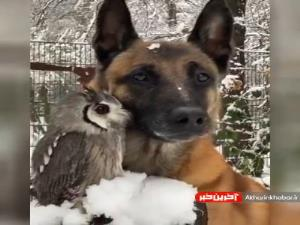 صحنه ای جالب از دوستی سگ و جغد