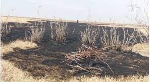 مهار آتشسوزی در تالاب قرهقشلاق بناب