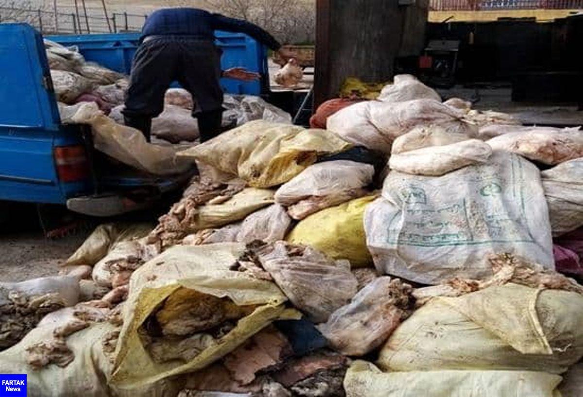 کشف و امحا بیش از ۶ تن پوست مرغ در شهرستان کرمانشاه