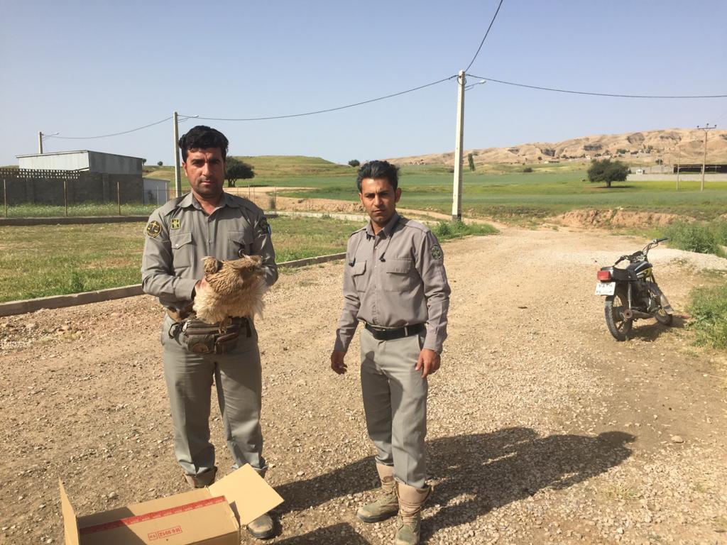 نجات یک بهله جغد ماهیخوار در دزفول