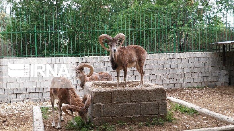 عکس/ مرکز تکثیر و پرورش گونههای حیات وحش در دشتستان