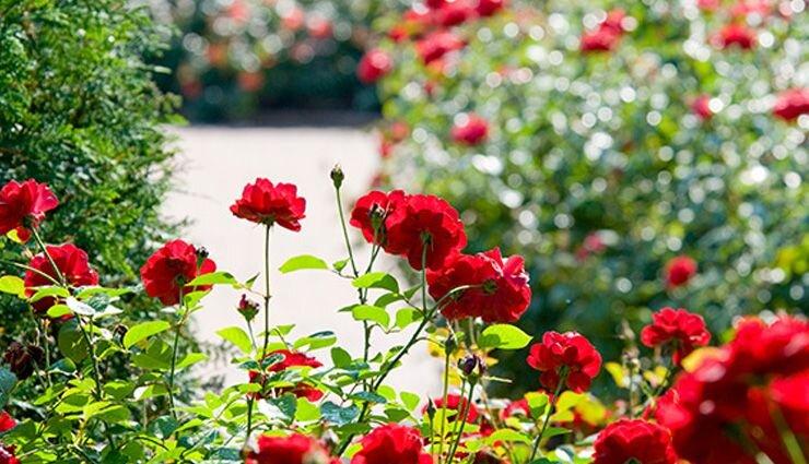 بخشی از کتاب/ گل ها در روان انسان ریشه دارند
