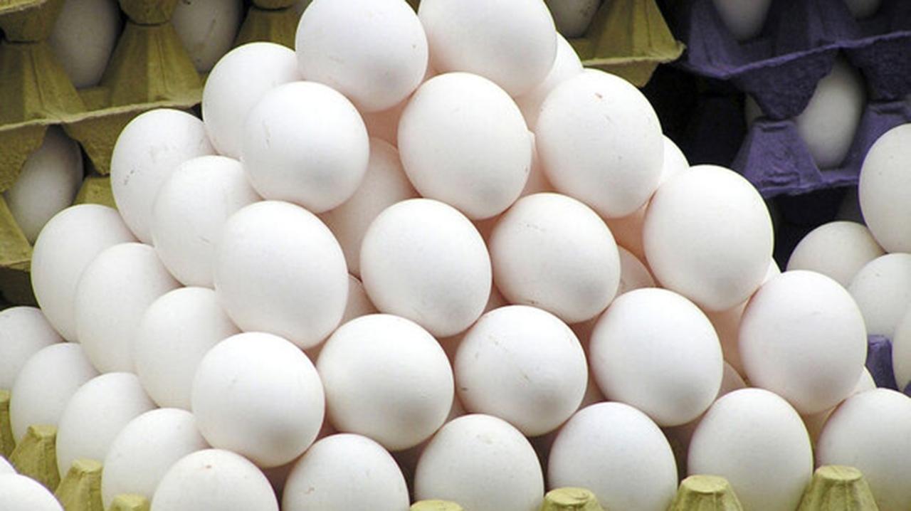 افزایش ۵۰ درصدی تولید تخم مرغ در گلستان